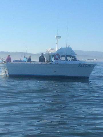 Newport marina store charters inc charter services for Deep sea fishing newport