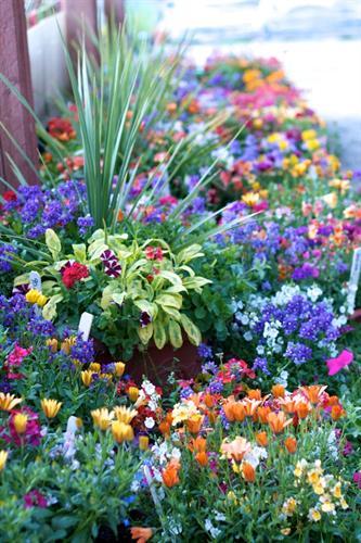 Gallery Image spring_flowers(4).jpg