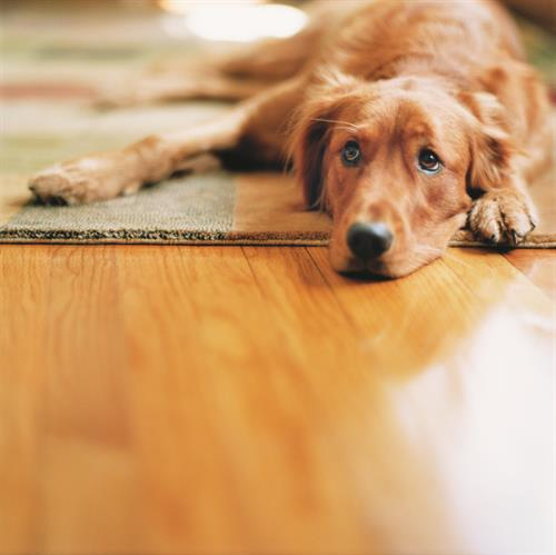 Flooring your pets will love!