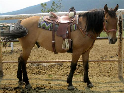 Horse Health and Safety is second only to that of our guests. We take great pride in our animals' well fare.