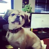 Meet our office manager, Lulu! :)
