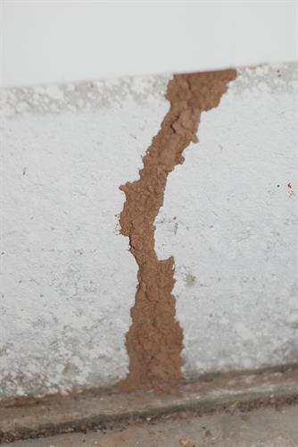Termite tunnel slab home