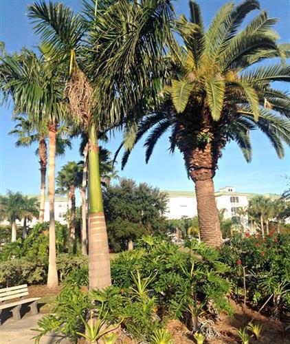 Punta Gorda Park landscaping