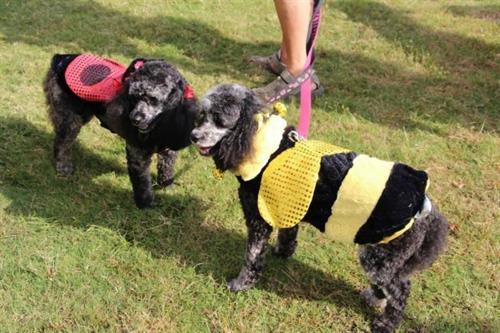 "Roxie ""Tech"" & Pebbles ""Dog""  win RIBBOS at the Sandy Springs Festival"