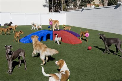 The Barkley Pet Hotel & Day Spa-Doggie Day Camp