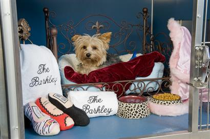 The Barkley Pet Hotel & Day Spa- A happy pup relaxing in a Serenity Suite