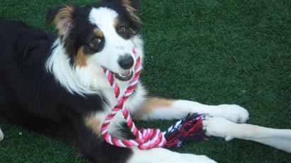 A playful pup enjoying Doggie day Camp