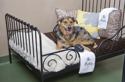 The Barkley Pet Hotel & Day Spa-a guest relaxing in his doggie suite