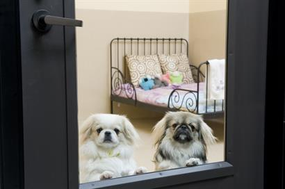 The Barkley Pet Hotel & Day Spa-Our luxurious Rodeo Drive Suites