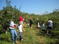 Picking apples in the apple orchard at the Red Apple Barn