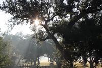 Gallery Image CP-Sunlight.jpg