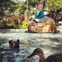 Gallery Image DucksMermaid.jpg