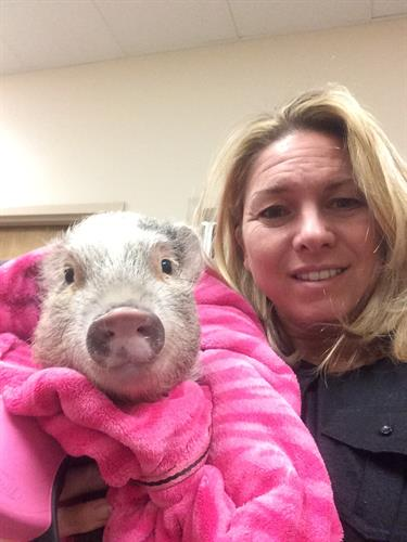 This little piggy went to see Dr. Bradford