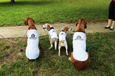 The 4 HandyPro Hounds:  Registered Therapy Dogs