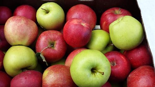 Our variety apples that are also chemical free.