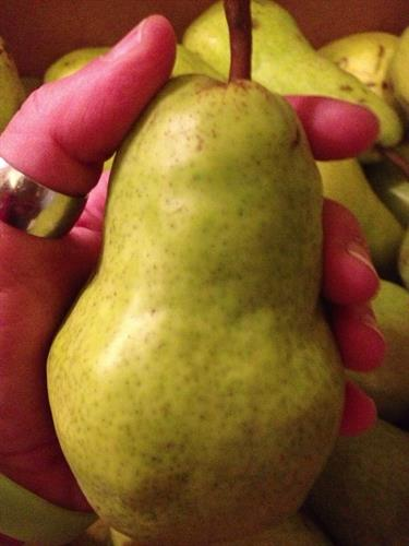 Actual Bartlett Pears we received.