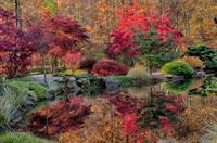 Japanese garden in fall at Gibbs