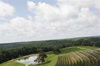 Enjoy vineyard views while dining with us!