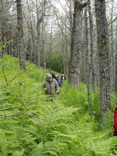 Gallery Image hiking_in_cottonwoods.JPG