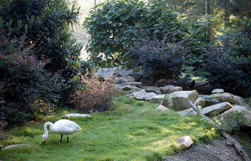 Large Eurasia aviary at Sylvan Heights Bird Park