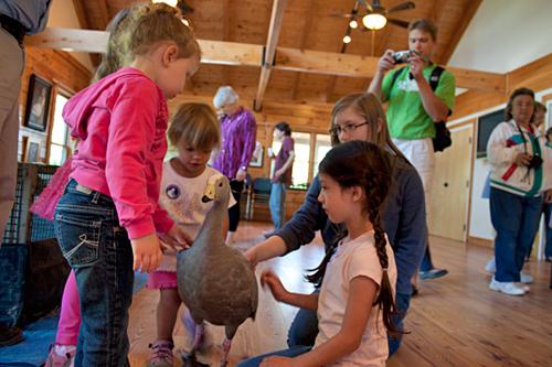 "Children meet ""Matilda"" the Australian goose"