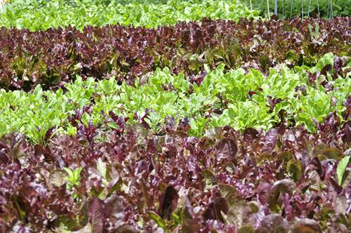 On-Site Produce Gardens