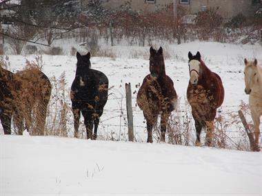 Sleigh Rides at Deep Creek Lake - Circle R Ranch