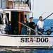 Sea Dog Sportfishing Charters