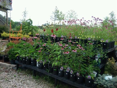 We take pride in being herbicide and pesticide free!