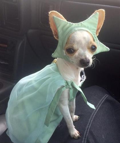 Liberty Mascot - Prissy