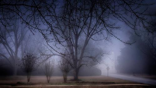 Morning fog in Albany, Georgia in January 2015