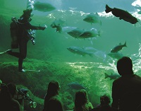 The Flint RiverQuarium follows the river's 350-mile journey to the Gulf of Mexico, and the 175,000 gallon Blue Hole is one of only a few open-air aquariums in the world.