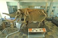 The Perry Mastodon at Meyer Science Center