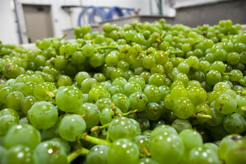 Junto Wine Vineyards Wineries