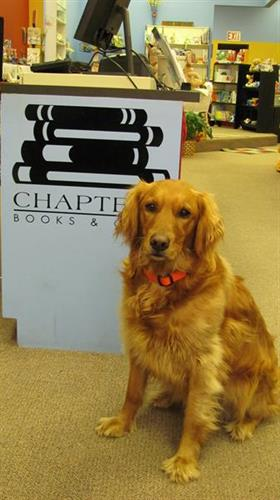 Jane the bookstore dog welcomes customers