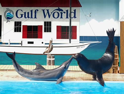 Sea Lion & Rough-tooted Dolphin show