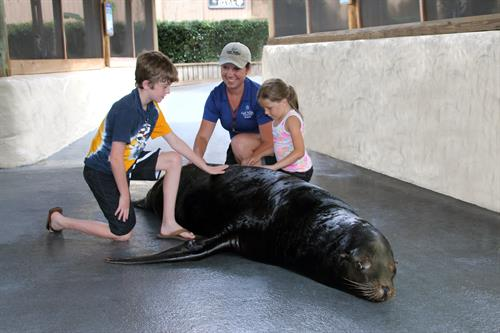 Sea Lion Meet N Greet Interactive Program