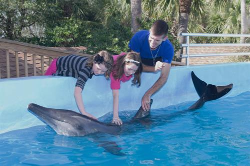 Dolphin Meet N Greet Interactive Program