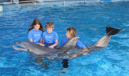 Swim with a Dolphin Interactive Program