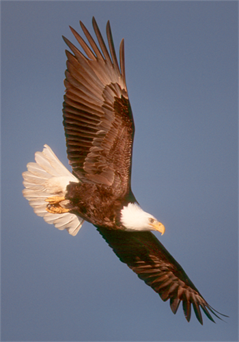 Gallery Image film_strip_eagle.png