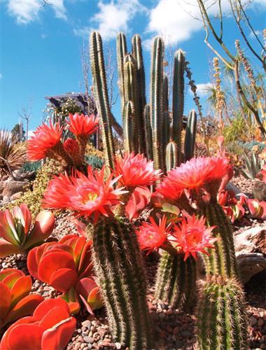 Explore our cactus and succulent gardens.
