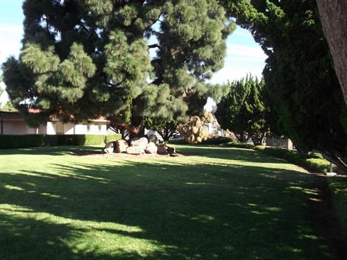 The greens at Rancho Jamacha.