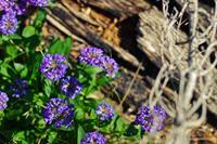 Wild Flowers in July