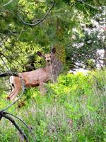 Wildlife is Abundant