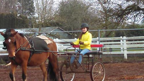 Harness Driving outside 100x200 arena
