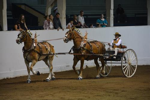 Oregon State Fair 2015 Draft Horse Competition