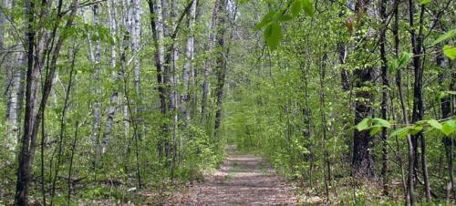 Area hiking and walking trails offer an up-close view of nature and wildlife.