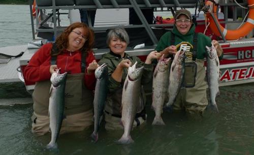 Sockeye Salmon on Fraser River