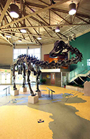 Utah Field House of Natural History, Vernal, Utah