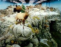 Rosenbruch Wildlife Museum, St. George, Utah